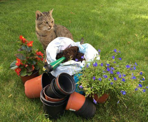 Starostlivosť o záhradu: substráty, hnojivá, kôra