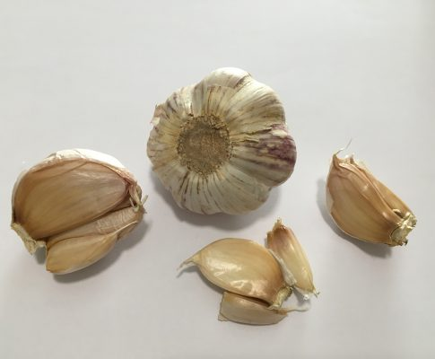 Cesnak kuchynský, (Allium sativum)